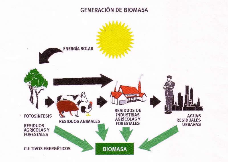 Cuadro Biomasa