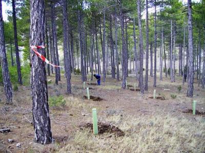 repoblacion forestal