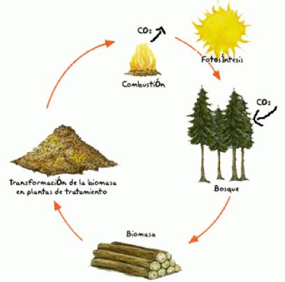 biomasa produccion 1