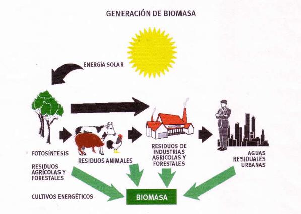 biomasa produccion