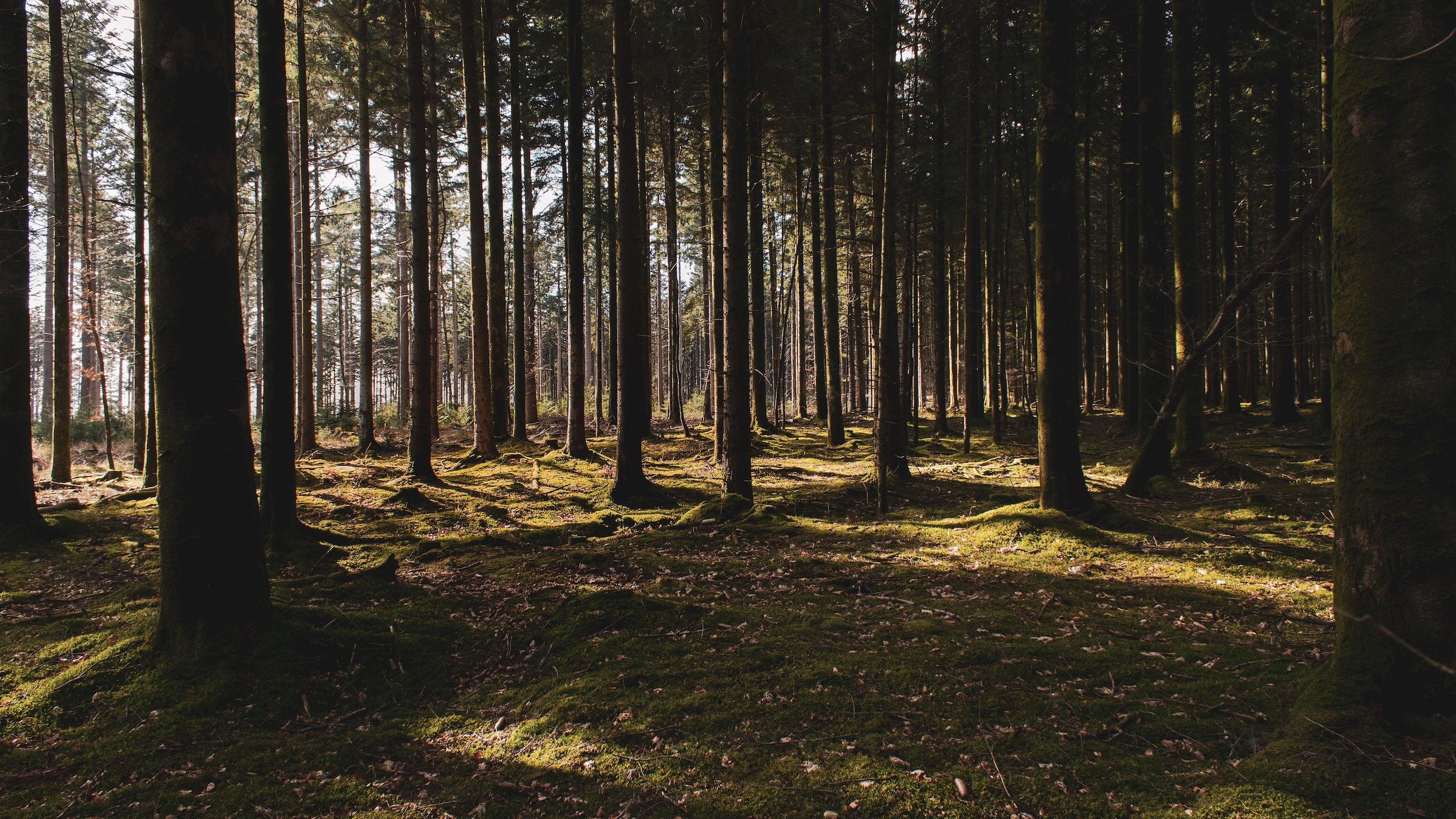 repoblacion forestal 1